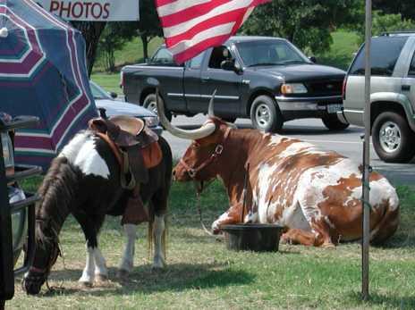 pony & steer