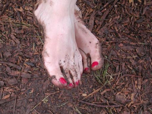 shirries feet